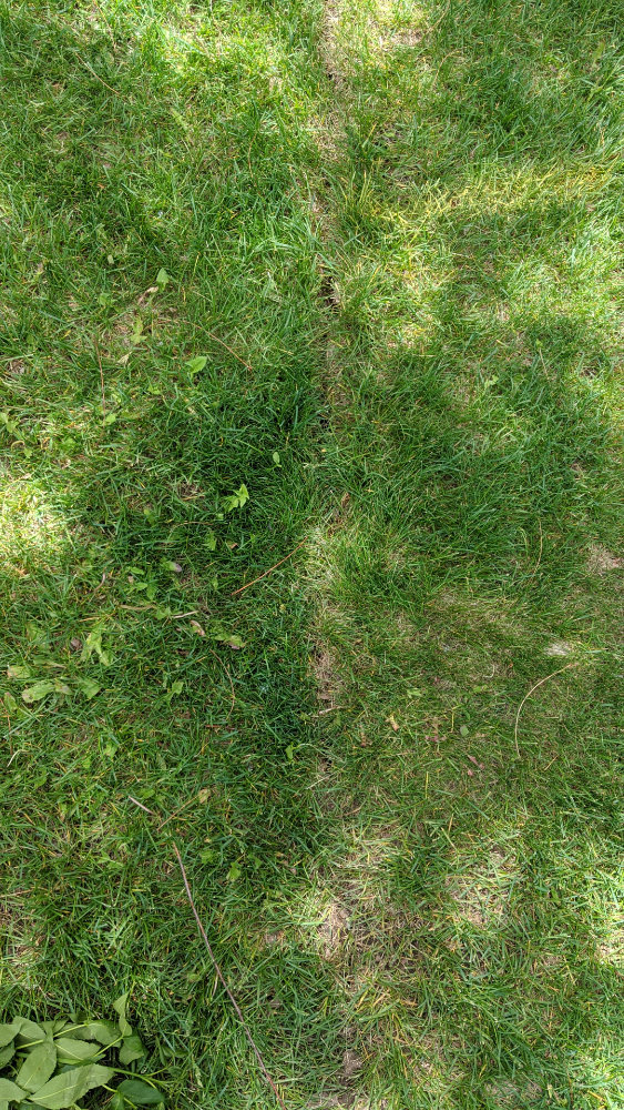 The repaired grass as it looked on Sunday.  Just a small break running through the center of the grass in the photo.